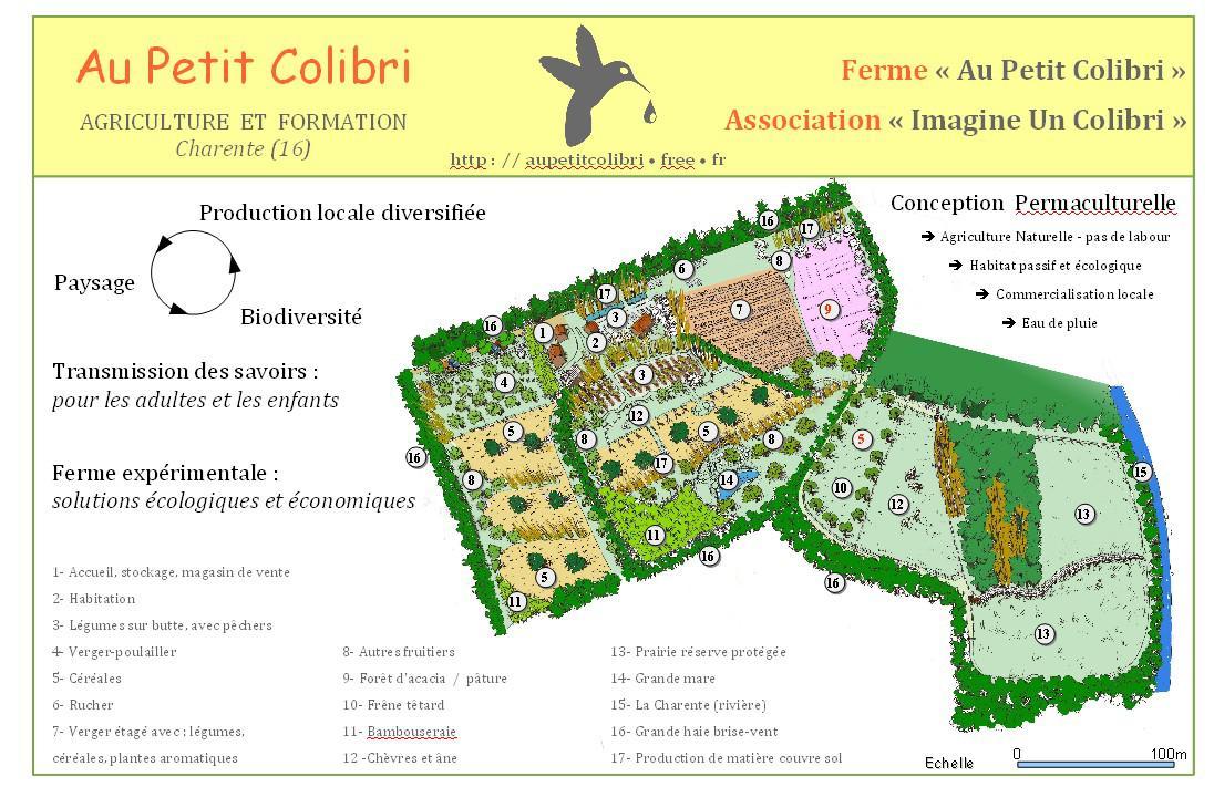 Colibri dans — BC) Social et Ecologie